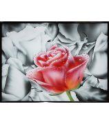 Контраст цвета - Розовая роза