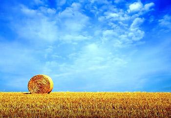 Сельский пейзаж маслом